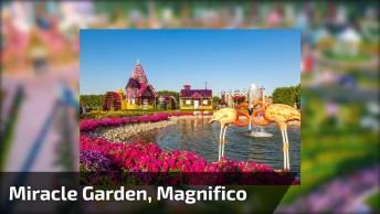 Vídeo Mostrando Miracle Garden, Um Jardim Magnifico Que Fica Em Dubai!