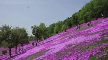 Vídeo Mostrando O Lindo Parque Em Tatebayashi No Japão, Veja Que Belo!