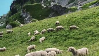 Vídeo Mostrando Pedacinho Dos Alpes Suíços, Um Lugar Lindo Cheio De Natureza!