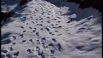 Vídeo Mostrando Um Dia Ensolarado Após Nevasca, Olha Só Estas Imagens!