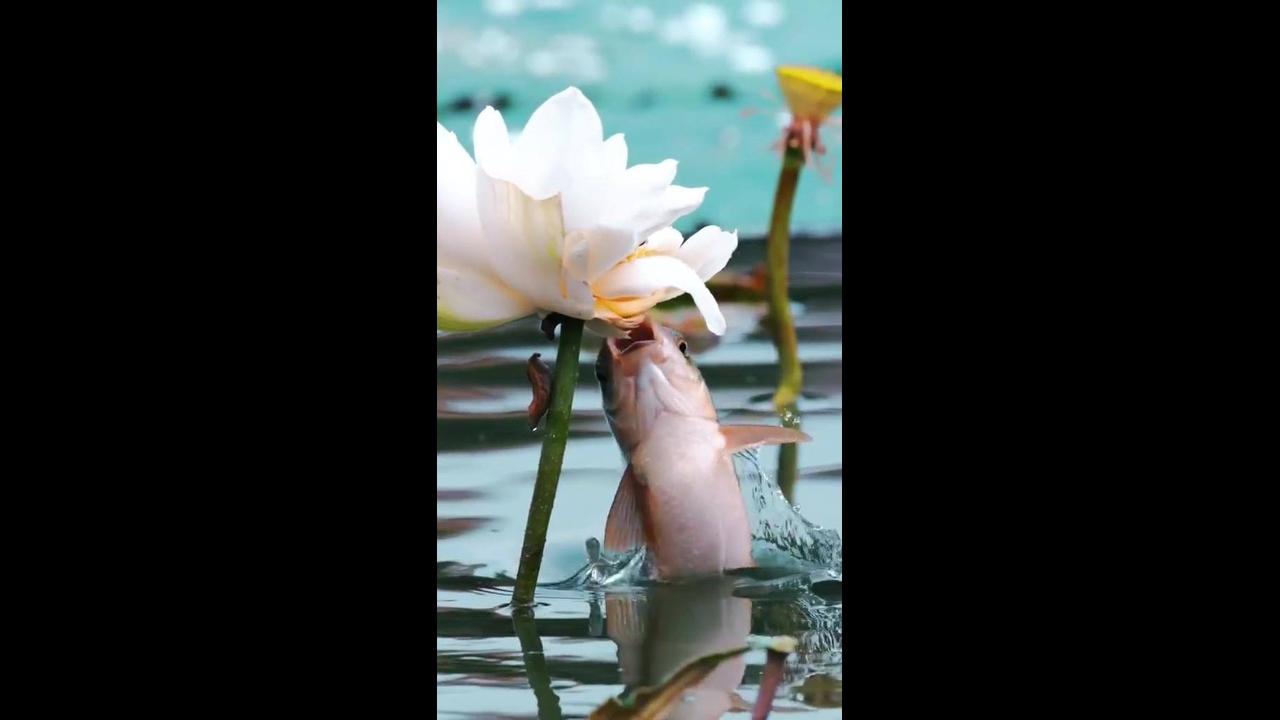 Vídeo mostrando um peixes se alimentando de insetos em uma flor