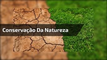 Vídeo Para Conservação Da Natureza Na Voz De Maria Bethânia, Confira!