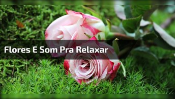 Video Para Relaxar, Com Flores Se Abrindo E Um Som De Uma Linda Música!