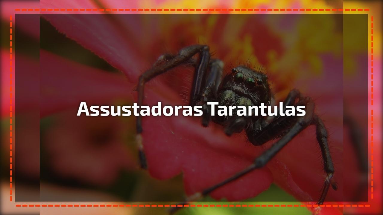 Assustadoras tarantulas
