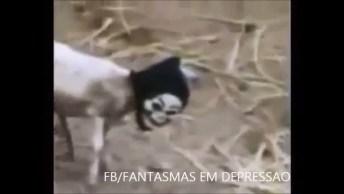 Cabra Vestida Com Máscara Da Morte Assusta As Suas Companheiras!