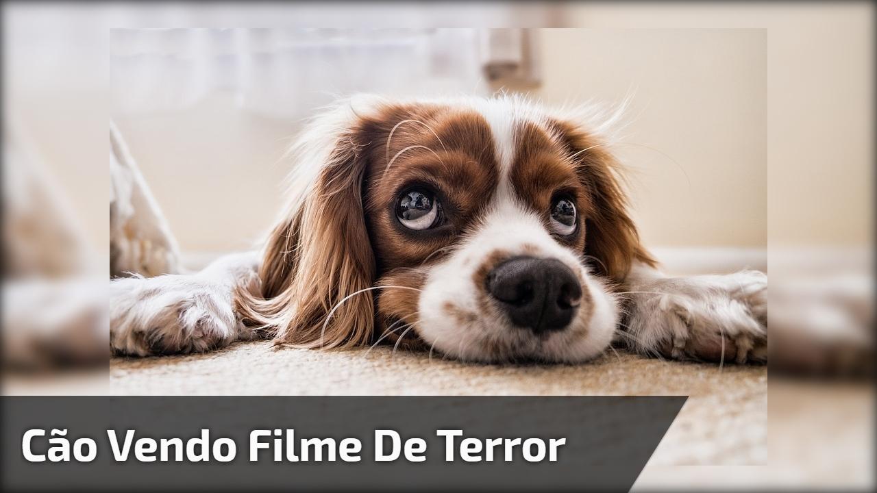 Cão vendo filme de terror