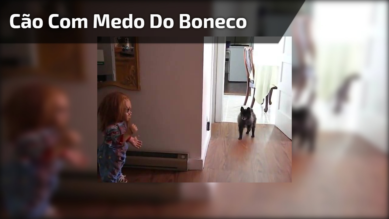 Cão com medo do boneco