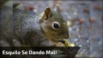 Câmera Flagra Momento Exato Em Que Esquilo É Pego Por Ratoeira, Assustador!