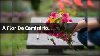 Confira Um Trecho Do Vídeo De Terror A Flor De Cemitério. . .