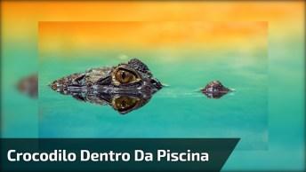 Crocodilo Entra Dentro Da Piscina E Ataca Casal, Confira As Cenas Assustadoras!