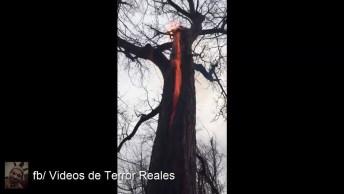 Esse Vídeo É Aterrorizante! Árvore Queima Por Dentro Sem Explicação!