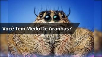 Este Vídeo É Contra Indicado Para Quem Tem Medo De Aranhas!