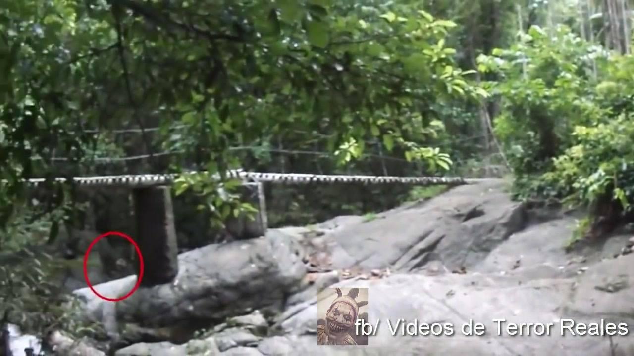 Extraterrestre e flagrado em filmagem no bosque