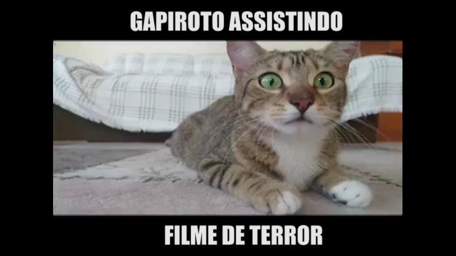 Gato assistindo filme de terror