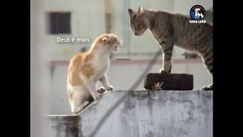 Gato Possuído, Veja O Exorcismo Mais Aterrorizante Da Internet!