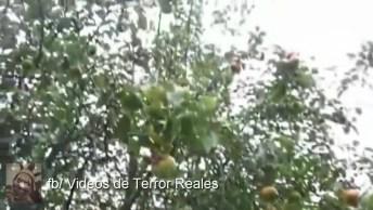 Para Você Que É Fã Do Paranormal, Confira Esse Vídeo Com Essa Aparição!