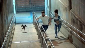 Pegadinha De Terror! Veja Só Este Cachorro De Três Cabeças, O Que Você Faria?