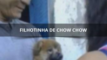 Filhotinha De Chow Chow Não Vai Com Pessoas Que Ela Não Conhece!