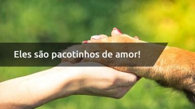 Frase De Amor Ao Cachorro - Eles São Pacotinhos De Amor!