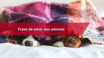 Frase De Amor Aos Animais - Compartilhe Com As Pessoas De Seu Facebook!