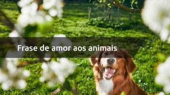 Frase De Amor Aos Animais - Preste Atenção Neste Sinal Quando Conhecer Alguém!