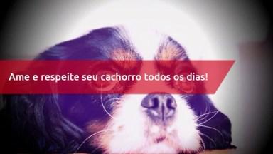 Frase De Amor Cachorro - Ame E Respeite Seu Cachorro Todos Os Dias!