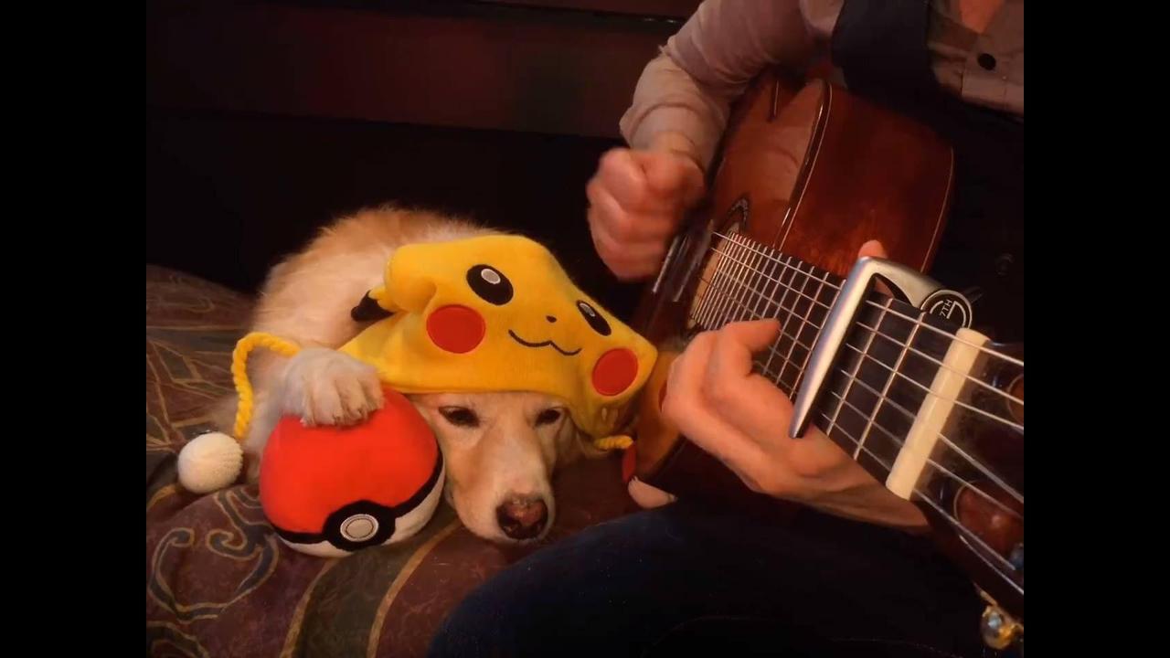Cachorro é apaixonado pelo Pokémon