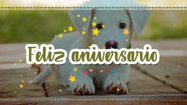 Mensagem De Aniversário Com Imagens De Cachorros, Um Vídeo Fofo E Lindo!