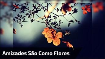 Amizades São Como Flores - Cultive As Suas Flores Com Essa Mensagem!