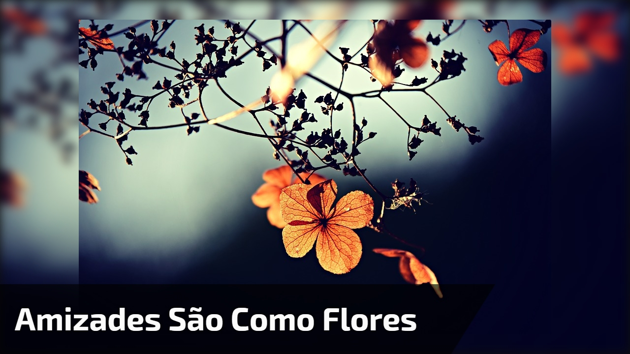 Amizades são como Flores