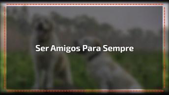 Frase De Amizade De Vinícius De Moraes, Compartilhe No Facebook!