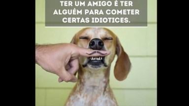 Frases De Amizade Para Facebook, Aqueles Que Cometem Idiotices Com Você!