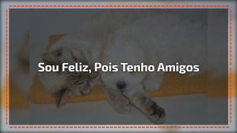 Mensagem De Amizade, Amigos São Provas De Que Sorrisos Devem Ser Compartilhados!