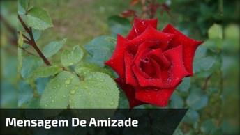 Mensagem De Amizade Com Flor Em Meio De Seu Jardim, Para Whatsapp!
