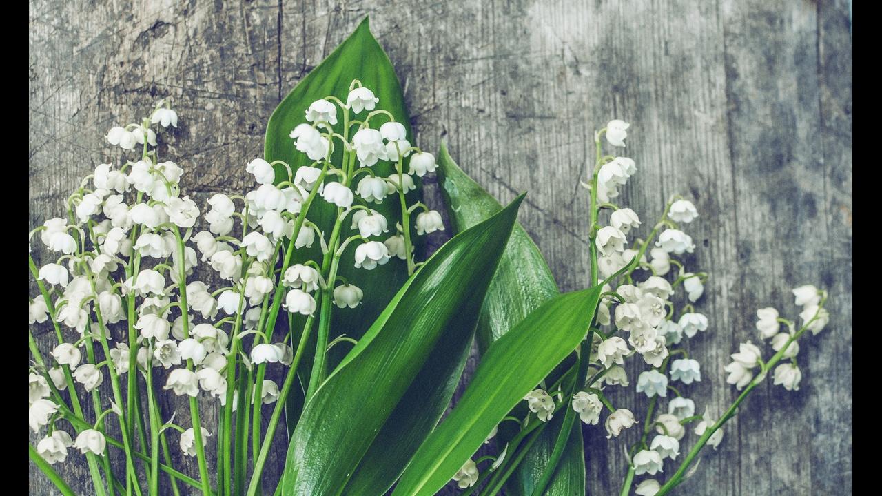 Mensagem de amizade com flores