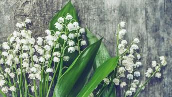 Mensagem De Amizade Com Flores - Amigos Verdadeiros São Para Sempre!