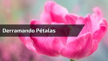 Mensagem De Amizade 'Derramando Pétalas', Para Compartilhar No Facebook!