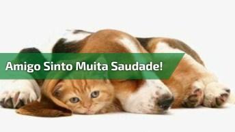 Mensagem De Amizade Para Enviar A Todos Amigos E Amigas Que Você Sente Saudade!