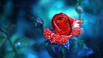 Mensagem Para Amigo Falecido - Sinto Saudades Todos Os Dias De Sua Amizade!
