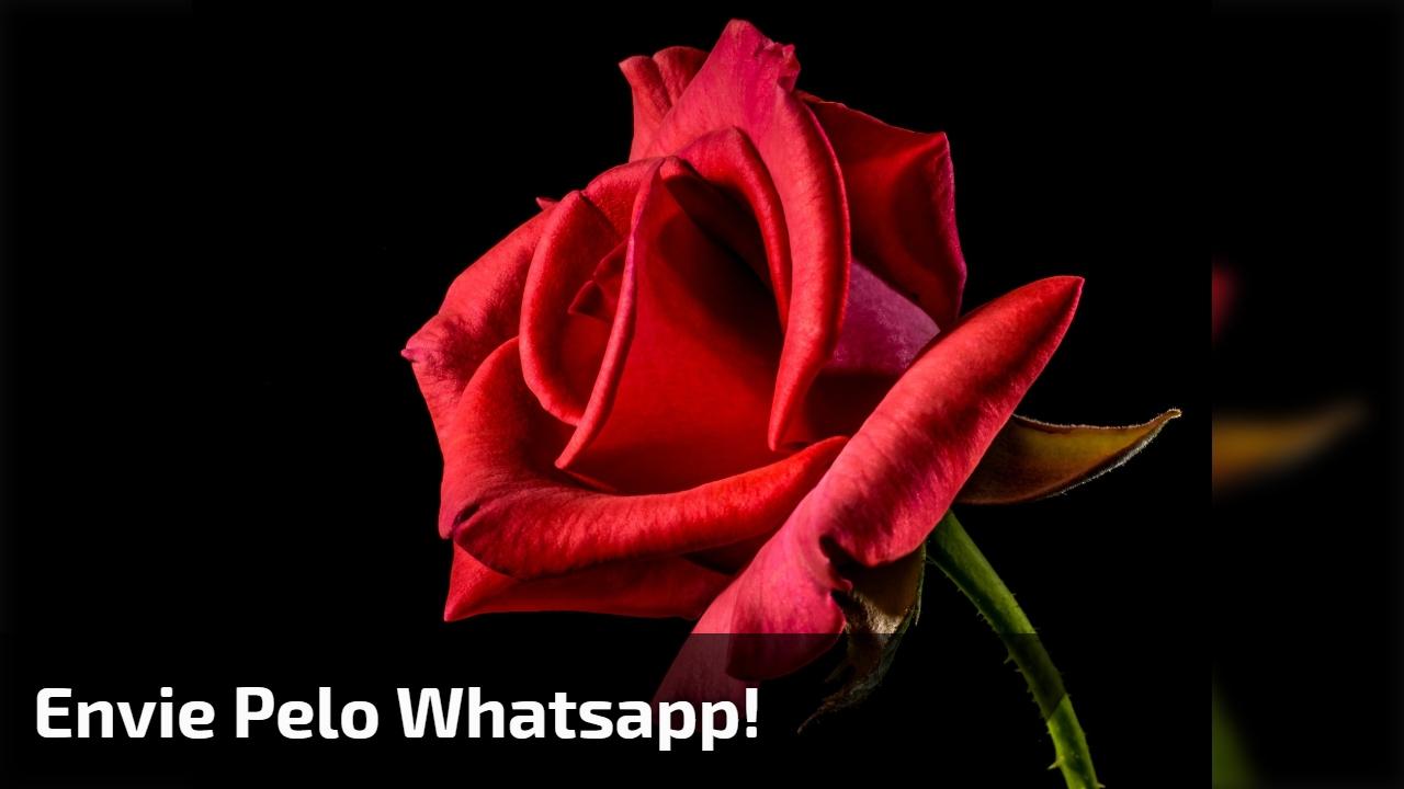 Envie pelo Whatsapp!