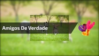 Mensagem Para Amigos Verdadeiros Por Padre Fábio De Melo!