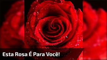 Mensagem Para Facebook Com Uma Linda Rosa Para Seus Amigos E Amigas!