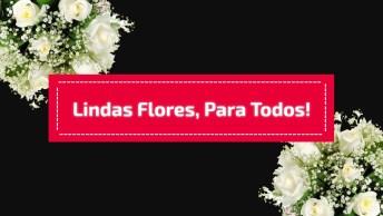 Mensagens Com Lindas Flores, Para Todos Aqueles Que São Especiais Em Sua Vida!