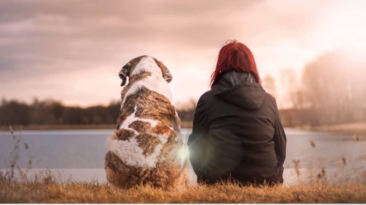 Vídeo de amizade com mensagem para amigo verdadeiro
