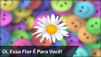 Vídeo De Amizade Curto Para Enviar Pelo Whatsapp, Muito Fofo!