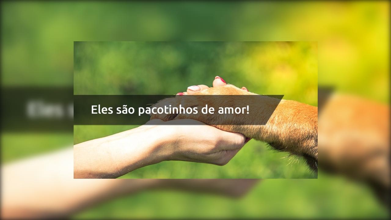 Frase de amor ao cachorro - Eles são pacotinhos de amor