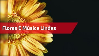 Imagens De Flores Lindas Com Música Romântica!