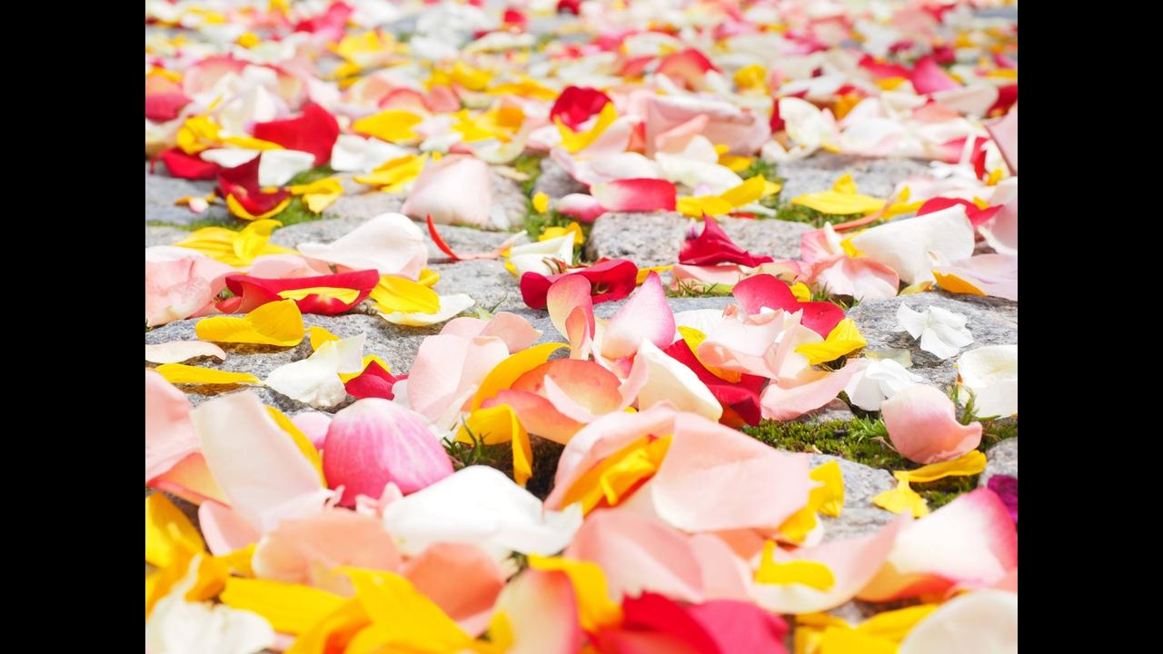 Mensagem de amor com Bom Dia! Tenha um ótimo dia meu amor!!!