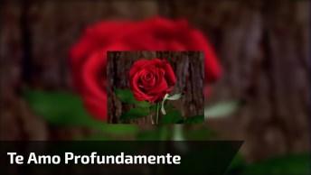 Que Esta Rosa Encha Seu Coração De Amor! Te Amo Profundamente!