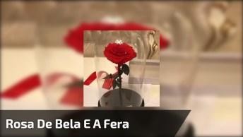 Vídeo Com Lindo Presente Que Namorado Deu Para Namorada, A Rosa De Bela E A Fera